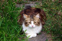 Cat lying on stone in between grass stock images
