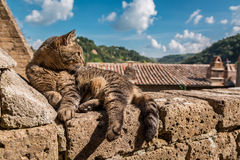 Cat lying on a stone wall Stock Photography