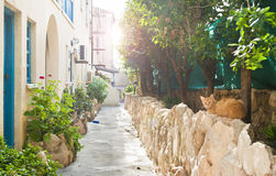 Cat lying on stone wall on narrow street Stock Photography
