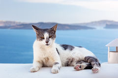 Cat lying on stone wall in Oia town, Santorini, Greece. Aegean sea stock photography