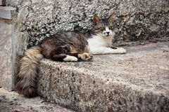 Cat lying on the street. On a stone, summer 2010, Montenegro Stock Images