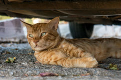 Cat lying in the street among the leaves Royalty Free Stock Images