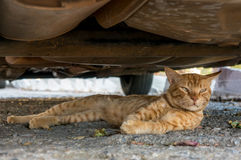Cat lying in the street among the leaves Stock Image