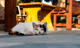 Cat lying in the street near cafe table Royalty Free Stock Photos