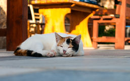 Cat lying in the street near cafe table Royalty Free Stock Images