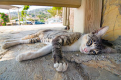 Cat lying in the street Royalty Free Stock Photo