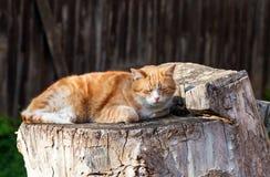 Cat lying on stump Stock Photos