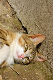 Cat lying in sun. A yellowish cat lying in bright sunlight next to a concrete wall Stock Photos