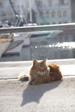 Cat lying in the sun Royalty Free Stock Photos