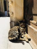 Cat. Lying in the sun. Picture taken in Sintra, Portugal stock photos