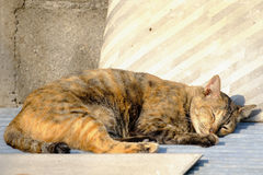 Cat lying in the sun for warmth. Royalty Free Stock Photos