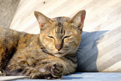 Cat lying in the sun for warmth. Stock Photography