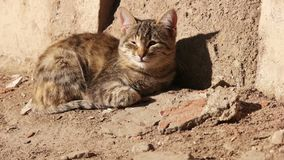 Cat lying in the sunny day stock footage