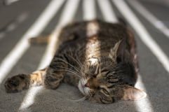 The cat is lying in the sunshine Stock Photos