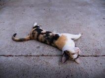 Cat Lying Supine coloreada tres Imagen de archivo libre de regalías