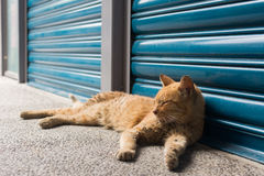 Cat lying to rest. Royalty Free Stock Photo
