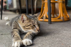 Cat lying to rest. Royalty Free Stock Photos