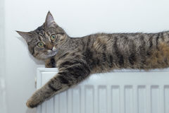Cat lying on top of a radiator looking up Royalty Free Stock Photo