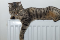 Cat lying on top of a radiator looking up Royalty Free Stock Images