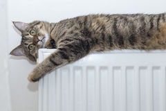 Cat lying on top of a radiator looking up Stock Photo