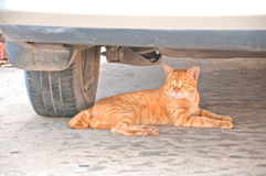 Cat lying under car under car Royalty Free Stock Image
