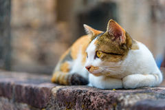 A cat is lying Royalty Free Stock Images