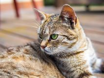 Cat lying and watching brigh colours. Cat lying on a wood and watching bright colours Royalty Free Stock Photos