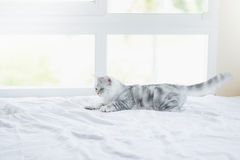 Cat lying on white bed Stock Image