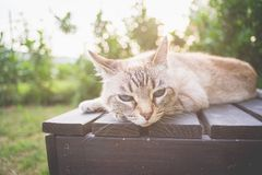 Cat lying on a wooden bench in backlight Stock Photography