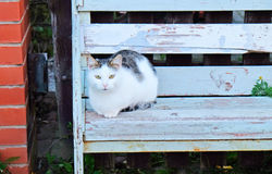 Cat is lying on a wooden bench Stock Photo