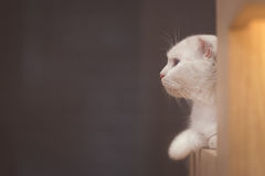 Cat lying on wooden table Royalty Free Stock Image