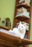 Cat lying on the writing desk Royalty Free Stock Photo
