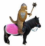 Cat with a mace on a black horse royalty free stock photography