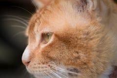 Cat Macro Royaltyfri Fotografi