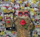 Cat made a selfie with a rose stock photos