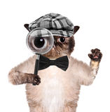 Cat with magnifying glass and searching. Creative stock image