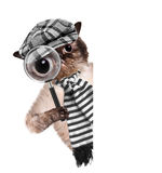Cat with magnifying glass and searching. Creative. Cat with magnifying glass and searching. The white banner.Creative stock image