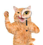 Cat with magnifying glass and searching . Royalty Free Stock Photos