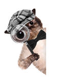 Cat with magnifying glass and searching. The white banner. Creative stock photo