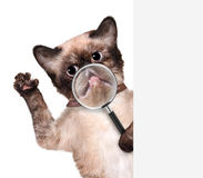 Cat with magnifying glass. Smile. Stock Photos