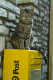 Cat on the mailbox. Cat on the yellow mailbox Royalty Free Stock Images