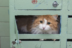 Cat in mailbox Royalty Free Stock Photos
