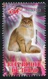 Cat Maine Coon lizenzfreie stockbilder