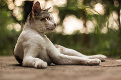 Cat 8. The cat make you relax every time Royalty Free Stock Photo
