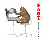 Cat orders food online 2. The cat makes a food order on the Internet from its computer. A hand gives him a metal tray with lid from laptop screen. Fast delivery royalty free stock photo