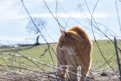 A cat makes a hump and feels threatened by a dog, Germany.  royalty free stock photo