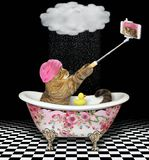 Cat makes a selfie in a color bath 2 stock photos