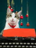 Cat making wishes for christmas Stock Photography