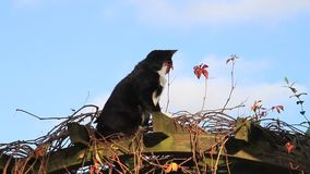 Cat, male, autumn, garden pergola, leaves stock video