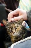 Cat. Man's hand fondle incredulous cat stock photo